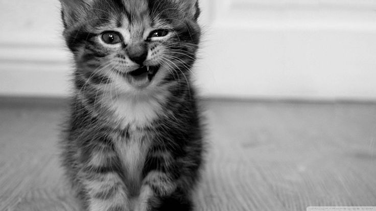 Cute Kittens Images Hd  The Cutest Kittens 1280×800 Funny Kitten Pictures | Adorable Wallpapers