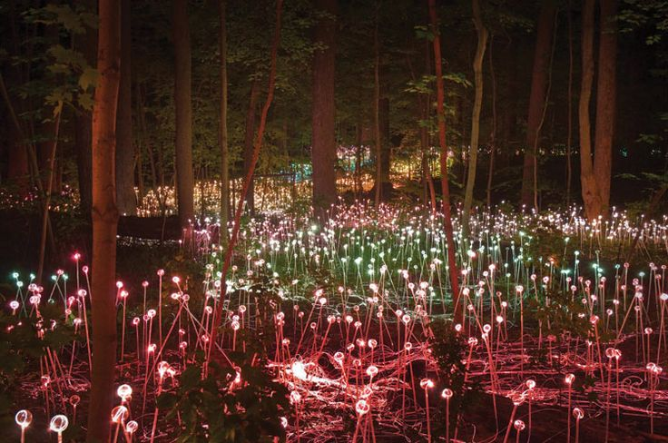 "Garden Alight - The Architect's Newspaper.  Bruce Munro installation at Longwood Gardens. ""Forest of Light""."