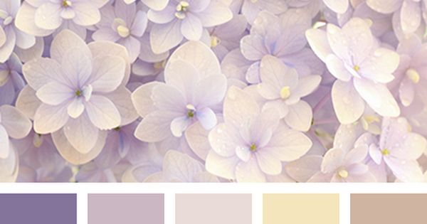 Liked on Pinterest: бежевый и коричневый винный цвет коричневый коричневый и бежевый коричневый и лиловый коричневый и фиолетовый лиловый и коричневый оттенки коричневого оттенки коричневого цвета оттенки розового оттенки фиолетового пастельный желтый розовый фиолетовый цвет гортензии.  2405