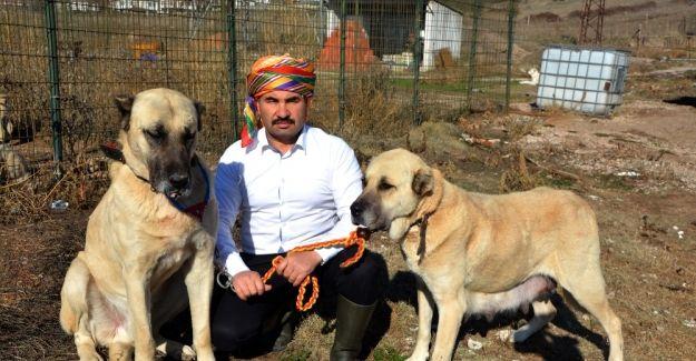 Çoban Köpekleri dınırda Mehmetçiğin can dostu olacaklar