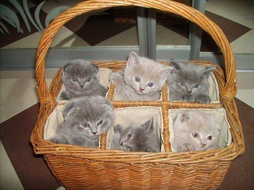 Kittens in a handy six-pack!