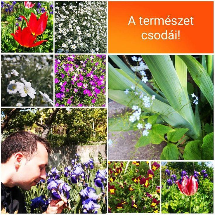 Bármikor amikor kimegyek tavasszal mamám kertjébe megcsodálom a természetet és ezeket a szép virágait? #termeszet  #csoda