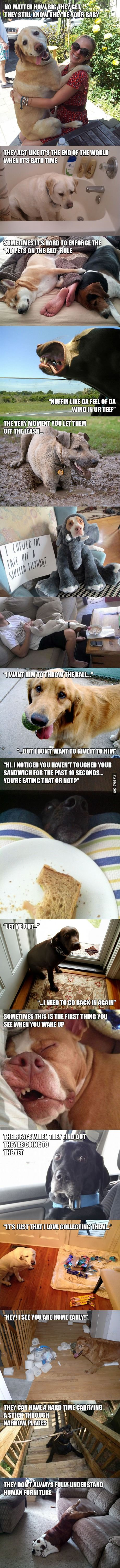 Dog owner struggles... Darla and the boys hit every one of these on the nose