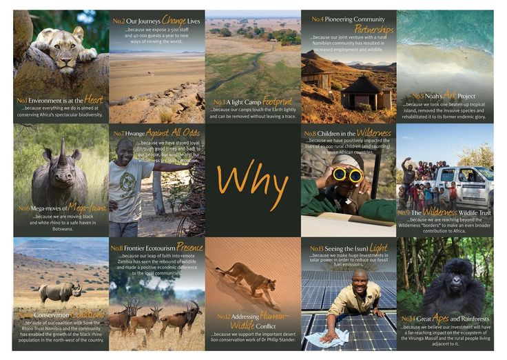 On this inspiring #AfricaDay we are thrilled to launch our new Why Website as part of our #PurposeIsTheNewLuxury campaign, which aims to entrench our core reason for being – to conserve and restore Africa's wilderness and wildlife by creating life-changing journeys and inspiring positive action. Have a look at it here http://www.why-wilderness-safaris.com/