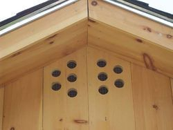 Chicken Coop Ventilation - Go Out There And Cut More Holes In Your Coop!
