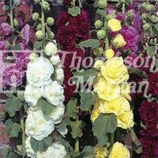 #Flower Seeds, Thompson and Morgan Flower Seeds, #Benary Flower Seeds, Seeds by Kraft, #Summer Flower Seeds, #Winter Flower Seeds, Flower #Seeds Online http://kraftseeds.com/flower-seeds