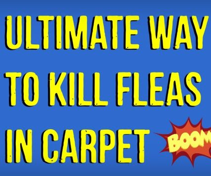 Best Natural Carpet Treatment For Fleas