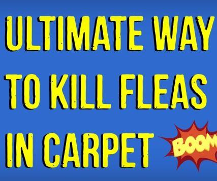 how to kill fleas on my dog naturally
