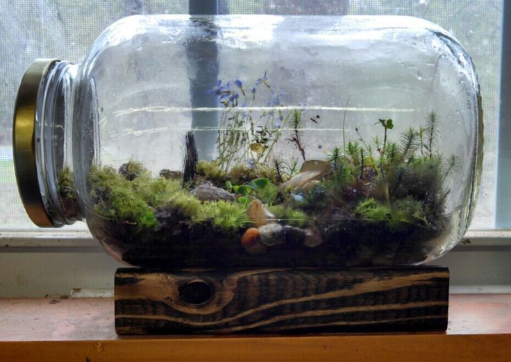 Homemade terrariums! No need to water them - they have their own ecosystem!