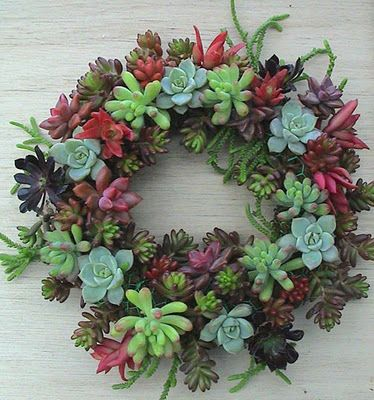 succulent wreath: