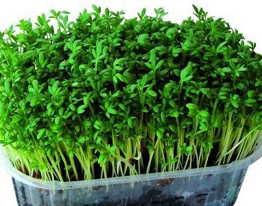 Как вырастить салат на крыше
