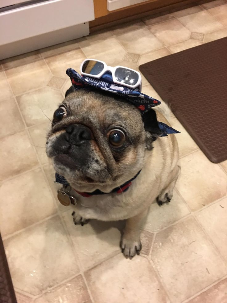 Pin By Dennis Green On Pug Funny Pinterest Pugs Boys