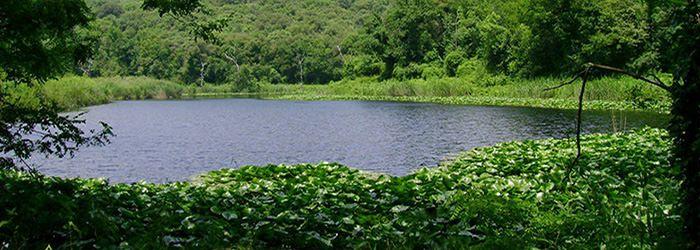 RISERVA NATURALE DEGLI ASTRONI. Con i suoi tre laghi, Lago Grande, Cofaniello Piccolo e Cofaniello Grande, è un luogo ideale in cui scoprire la natura stando in città. Oasi WWF, il Cratere degli Astroni è attraversato da sentieri naturali, ha una fauna ricca di animali, anche rari, da osservare e una vegetazione variegata. Un posto davvero incantevole per chi cerca una fuga dal caos e dallo stress.  Indirizzo: via Agnano agli Astroni, 468