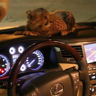 The luxuries of UAE