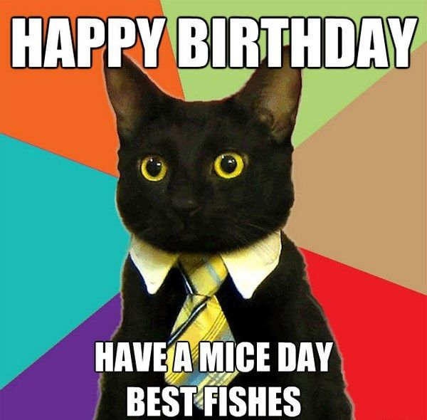 The 25 best Birthday wishes songs ideas – Cat Birthday Greetings