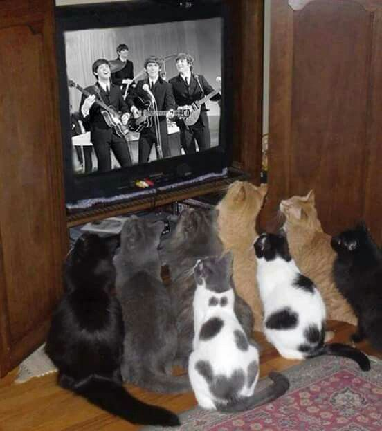 A group of cats watching The Beatles! LOL :*-)