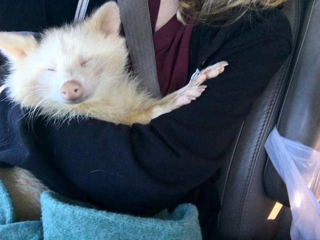 В одно прекрасное утро Максина Бэрд, основатель приюта для животных A New Hope: Animal Sanctuary & Education Center в Джорджии, получила странный телефонный звонок: ее спросили, готова ли она взять... — Только добрые новости