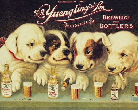 Yuengling Beer Dogs | Beer Labels | Pinterest | Beer and Dogs