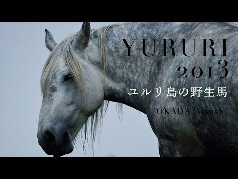 Yururi Island horse. 北海道 ユルリ島の野生馬 2013年