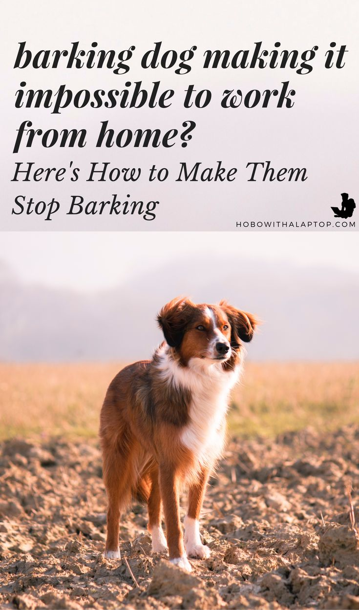 Ever wondered how to make stray dogs stop barking? This short article will tell you how, and provide a free solution.