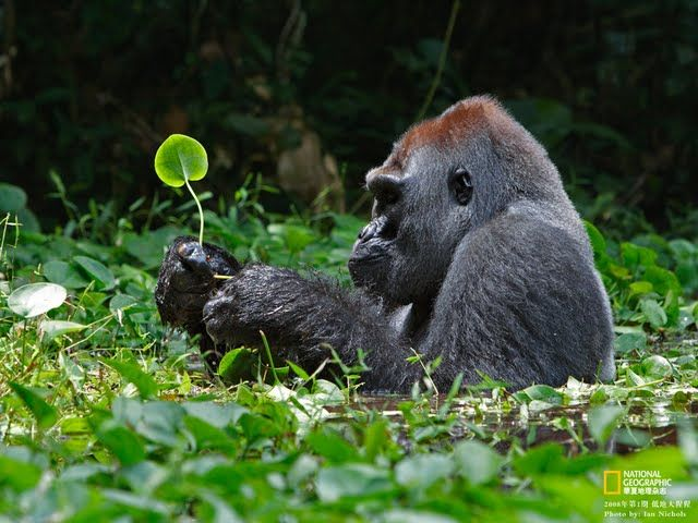 National+Geographic+Wild+Animals   ... National Geographic best wildlife photos , National Geographic animals