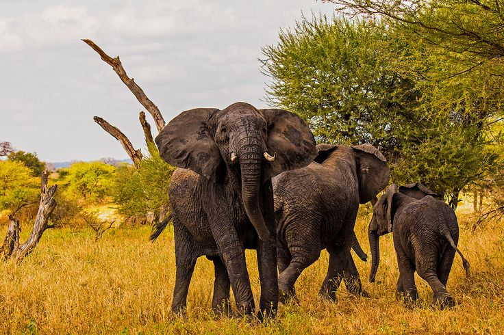 On the occasion of National Elephant Appreciation Day on Sept. 22, let's take a look at some interesting facts about these intelligent animals.