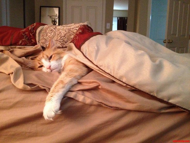 Ringo The Sleepyhead - http://cutecatshq.com/cats/ringo-the-sleepyhead/