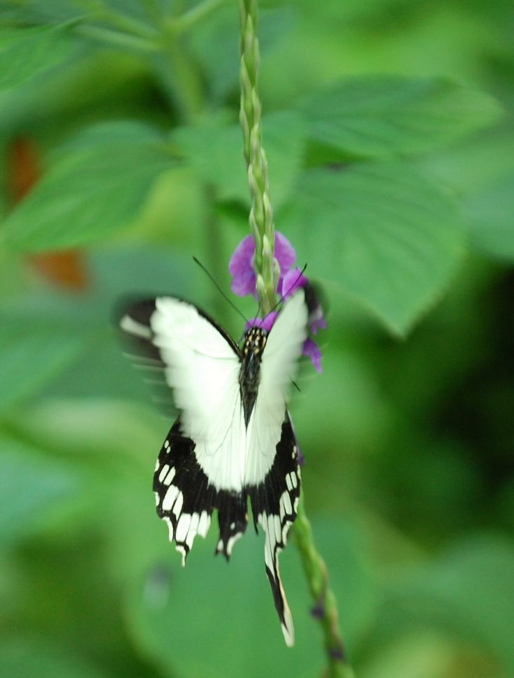 80 Best Bees Butterflies And Other Bugs Images On Pinterest Bees Butterflies And Butterfly House