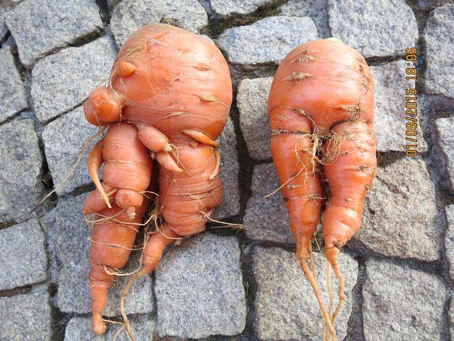 DOGADANI: Dlaczego dzieci są jak marchewki? Rok szkolny 2015...