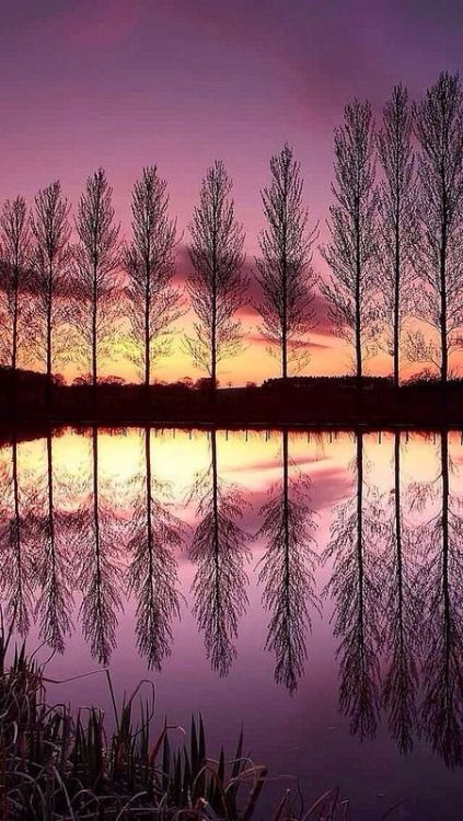 Beautiful trees and sky.