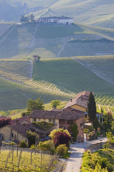 Hillsides covered with vineyards, Castiglione Falletto, Piedmont, Italy. Photo: Jon Arnold Images, Peter Adams