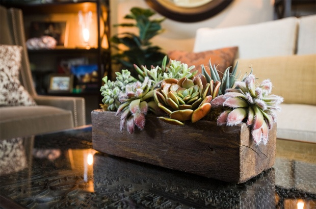 Coffee Table Decoration Succulent Grouping Flower