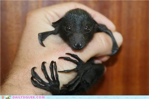 I love bats!