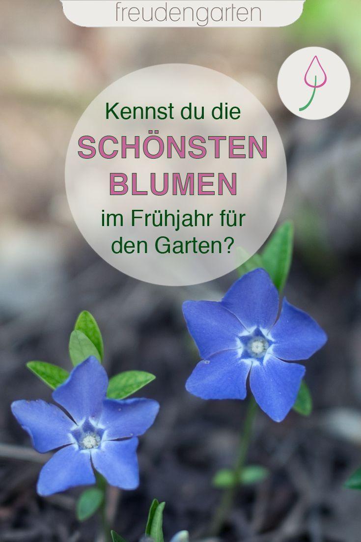 Die Ersten Blumen Im Fruhling Straucher Garten Garten Pflanzen Pflanzen