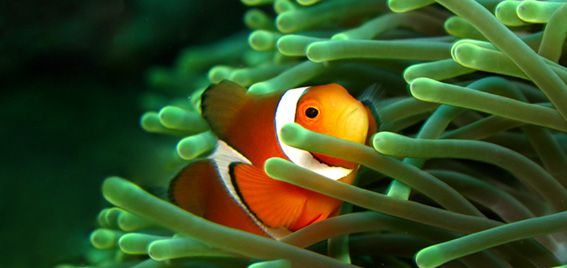 How-To Set Up a Clownfish and Anemone Aquarium Part 1 ...