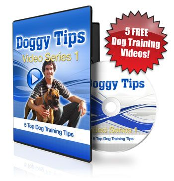 Dog Trick Training Tips : Myths About Dog Training Breeds