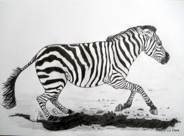 #art Zebra at full flight. Pencil on paper 2012
