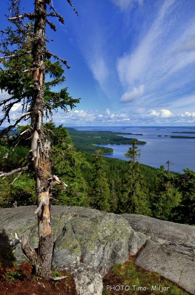 National park Koli landscape - Näkymä Kolilta