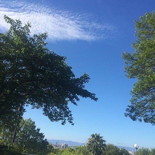 【朝からランニング】  今日は朝早く目覚めて久しぶりに走ってきました*\(^o^)/* 朝からランニングとか高校ぶりかもしれない…笑  緑の中を走るのがすっごく気持ち良くて、音楽を聞かずに蝉の声や自然の音を聞いてたら、あぁ〜生かされてるなーってしみじみ✨  今日も1日がんばろー  #美容#エステ#ヘアカラー#メイク#カラコン#エステ#ヘアケア#スキンケア#ヨガ#プチプラコスメ#コスパ#まつエク#セルフネイル#イメチェン#ネイル#新宿#ヘアアレンジ動画#巻き髪#渋谷ネイルサロン#筋トレ女子#おしゃれさんと繋がりたい#21歳#23歳#副業#最新アフィリエイト#在宅ワーク#自由な毎日#即金#即金性#相互フォロー100