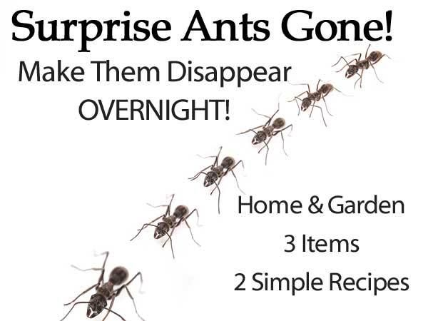 Two recipes for killing ants in your yard or garden.