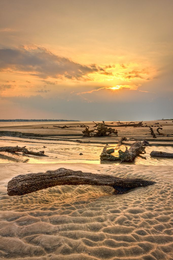 Driftwood Beach - St. Simons Island - Georgia - USA (von Kay Gaensler)༺ ♠ ༻*ŦƶȠ*༺ ♠ ༻