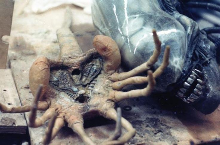 Damn, that #Facehugger looks like a real dead life form ...