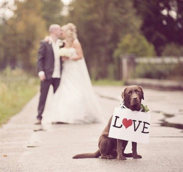 Hond op je bruiloft - Leuke trouwfoto's gegarandeerd #bruiloft #trouwfoto #poses…