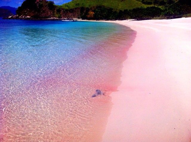 Pink Beach, Lombok Indonesia