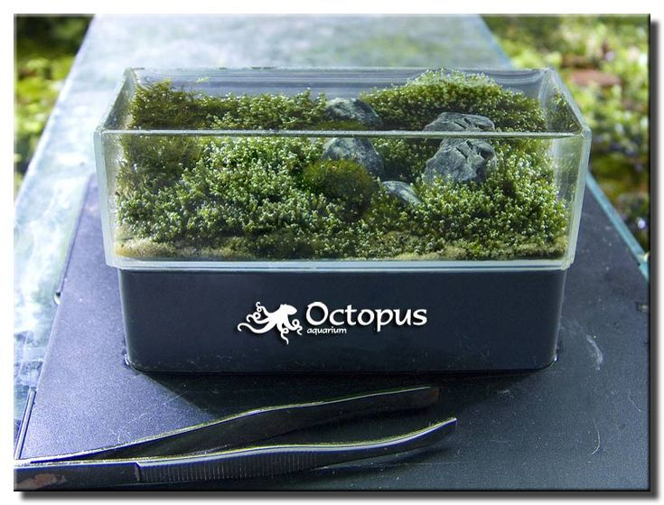Micro aquascaping discusses creating nano tank for Micro fish tank