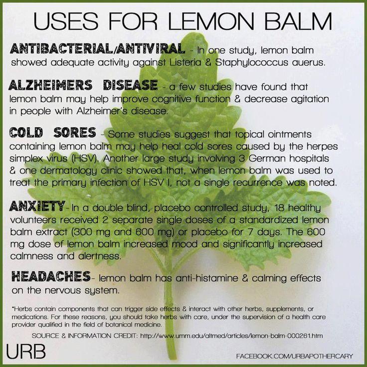 lemon balm - antiviral, antibacterial, mood-enhancing and tasty!