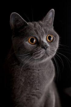 #cat #dark #yellow #eyes #portrait