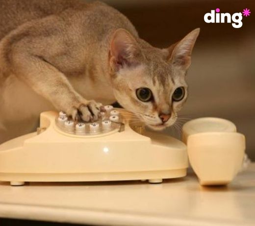 This is a cat-astrophe!  I have a fur ball and I can't call my fur-dresser! I better top-up with ding*!! www.ding.com  #dinganimals