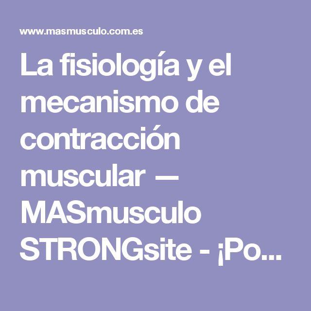 La fisiología y el mecanismo de contracción muscular — MASmusculo STRONGsite - ¡Ponte en forma!