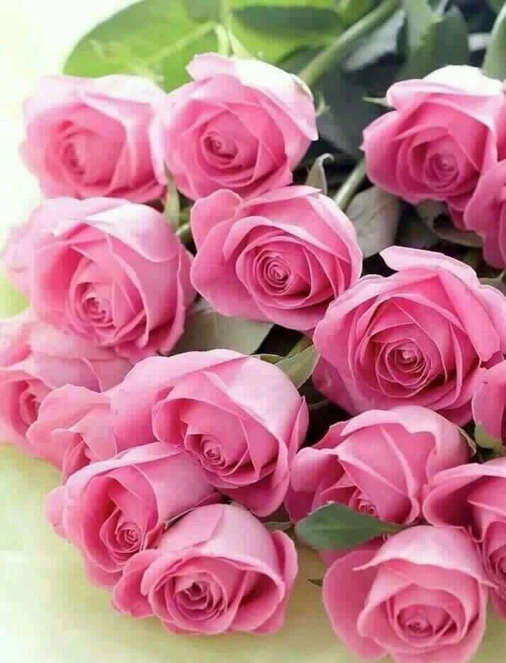 Открытка цветов розы